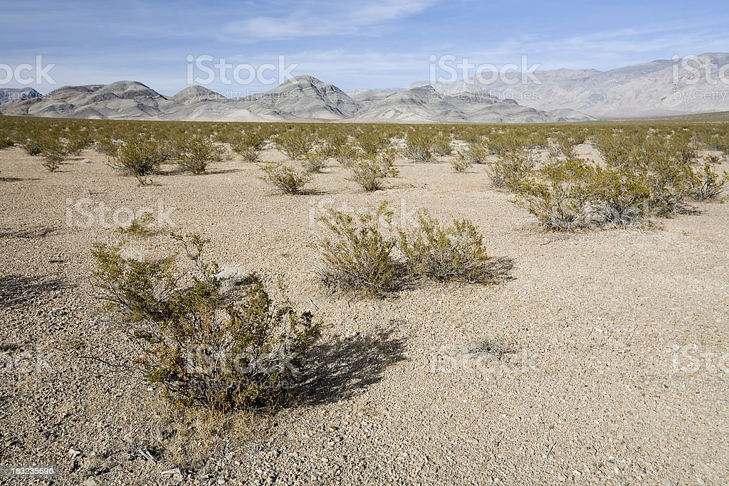 Creosote Bushes in Death Valley royalty-free stock photo