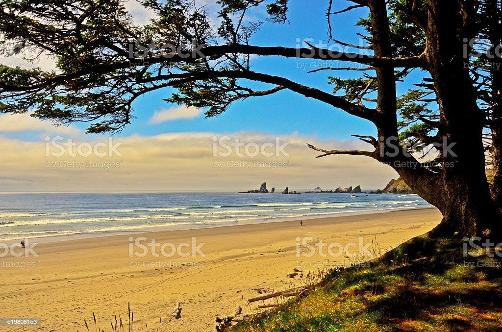 Crescent Пляж в обрамлении дерево ветви-Побережье Орегона Стоковые фото Стоковая фотография