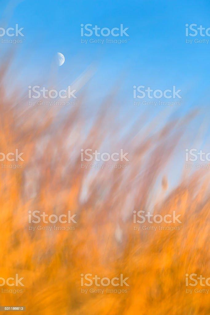 Crescent Moon Above Burning Grass stock photo