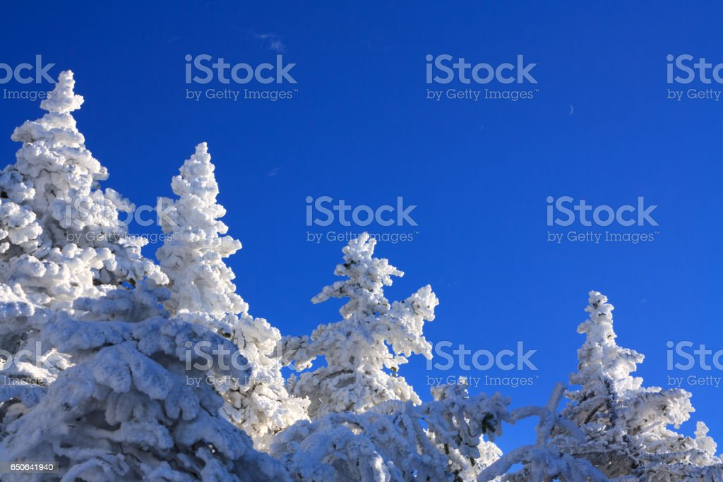 Crescent moon in blue sky over snowy trees, Falling Waters Trail, White Mountain National Forest, New Hampshire stock photo