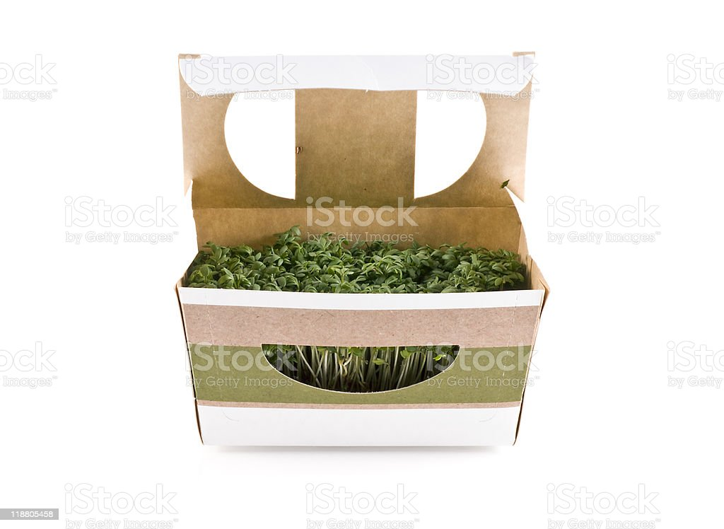 Cress. stock photo