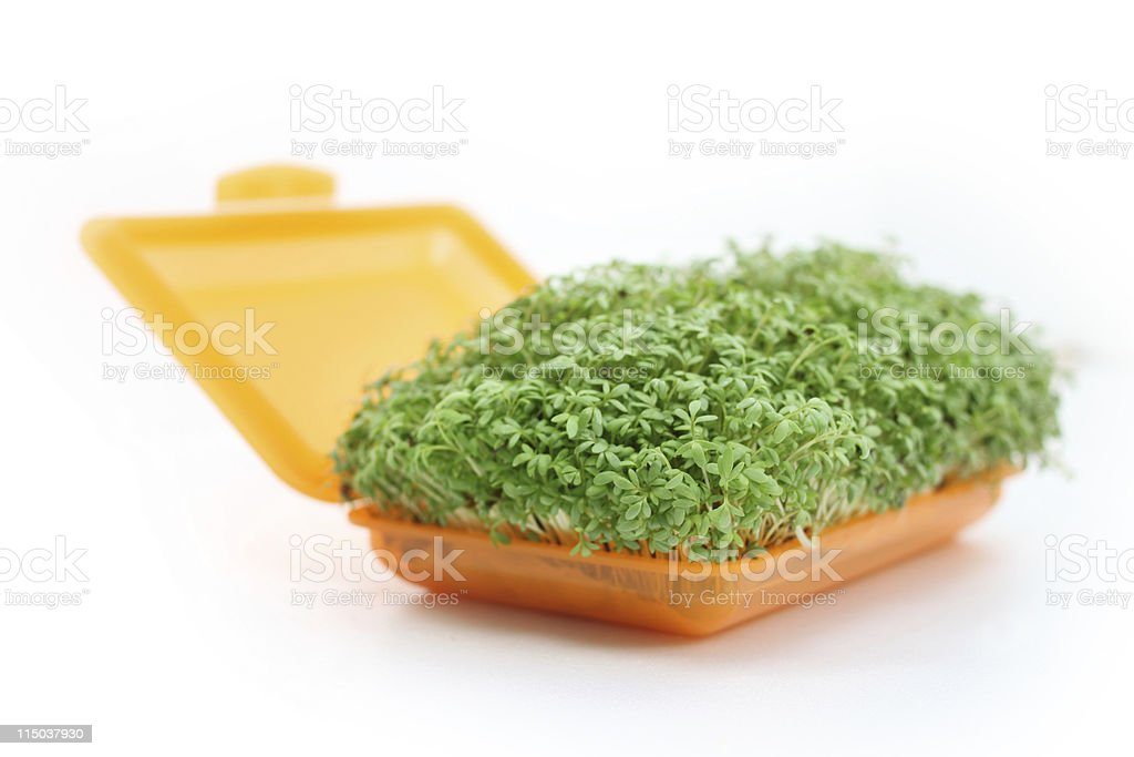 cress to go royalty-free stock photo