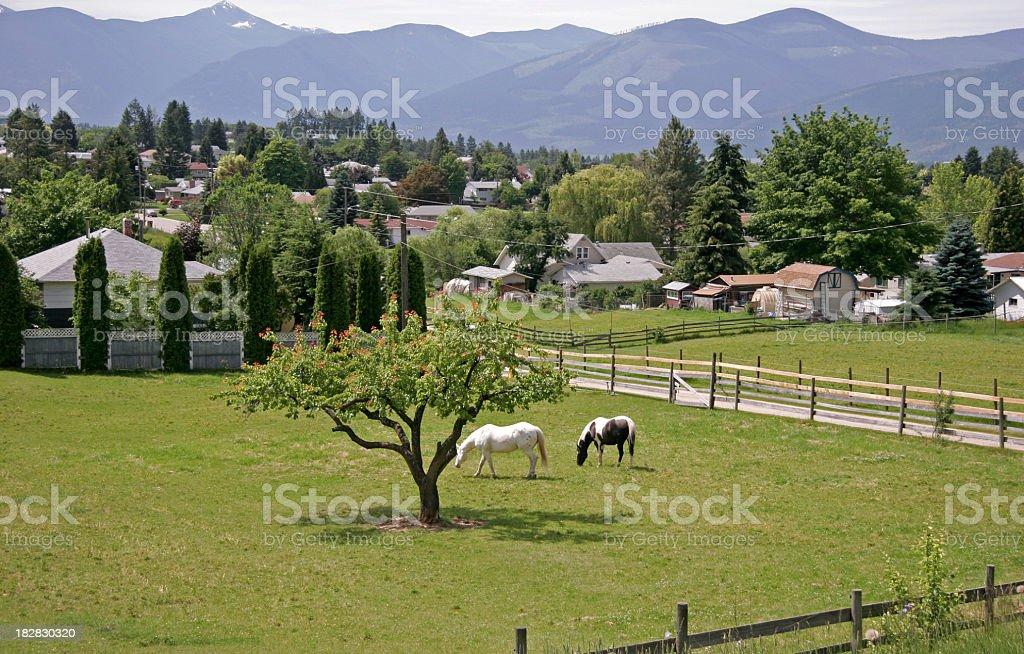 Creston British Columbia Landscape With Horses stock photo