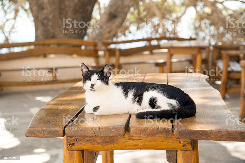 Cretan cat stock photo