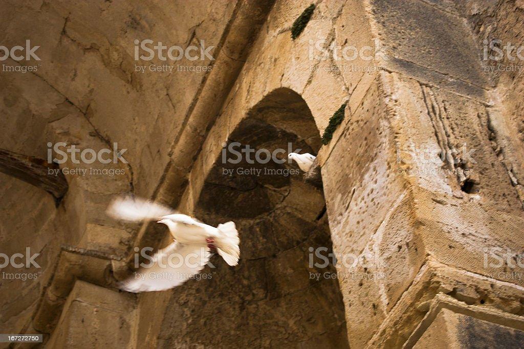 Crete - Bird in the Gorys temple stock photo