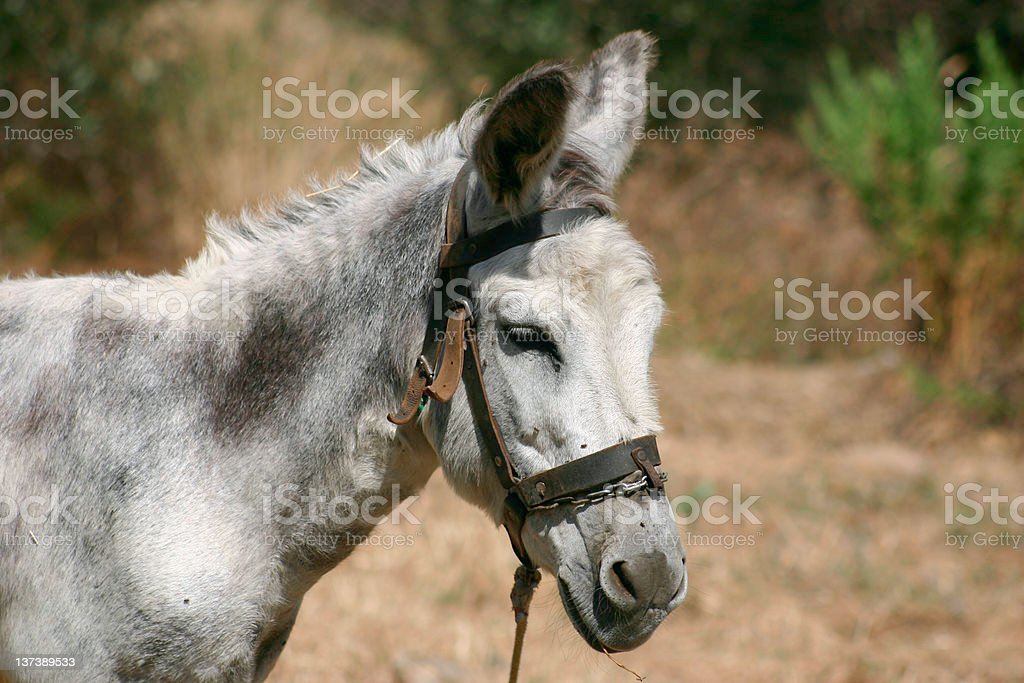 Crete / Donkey royalty-free stock photo