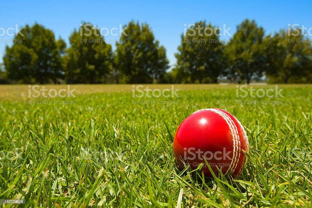 Cricket ball in green grass with blue sky and tree stock photo