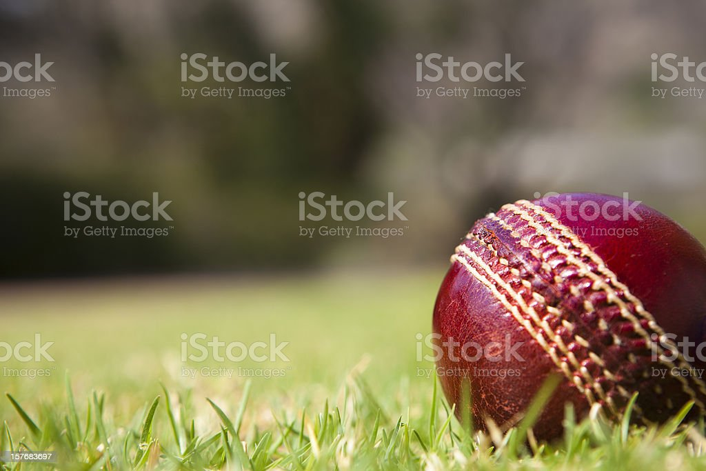 Cricket ball on grass stock photo