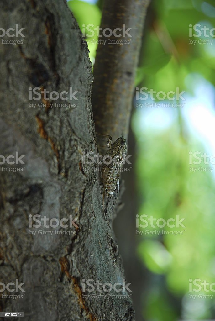 Cricket in a Tree stock photo