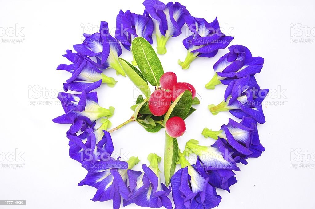 Crimson fruit  isolated in circle of Butterfly pea flower royalty-free stock photo