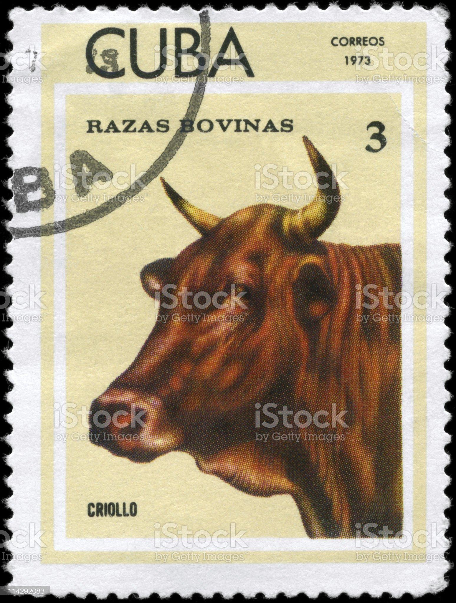 Criollo royalty-free stock photo