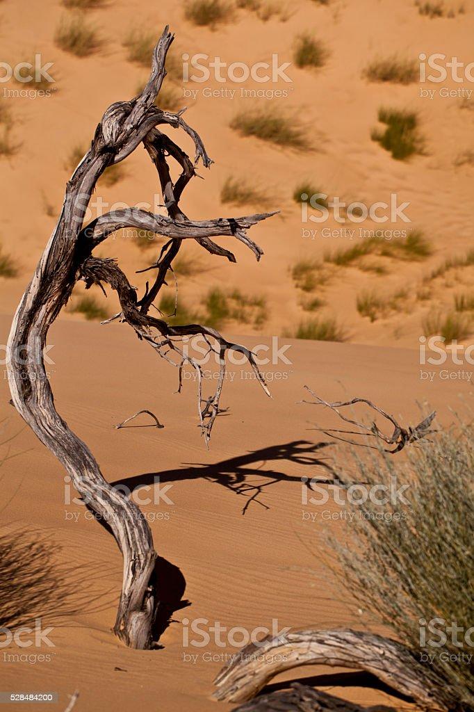 Crippled Tree stock photo