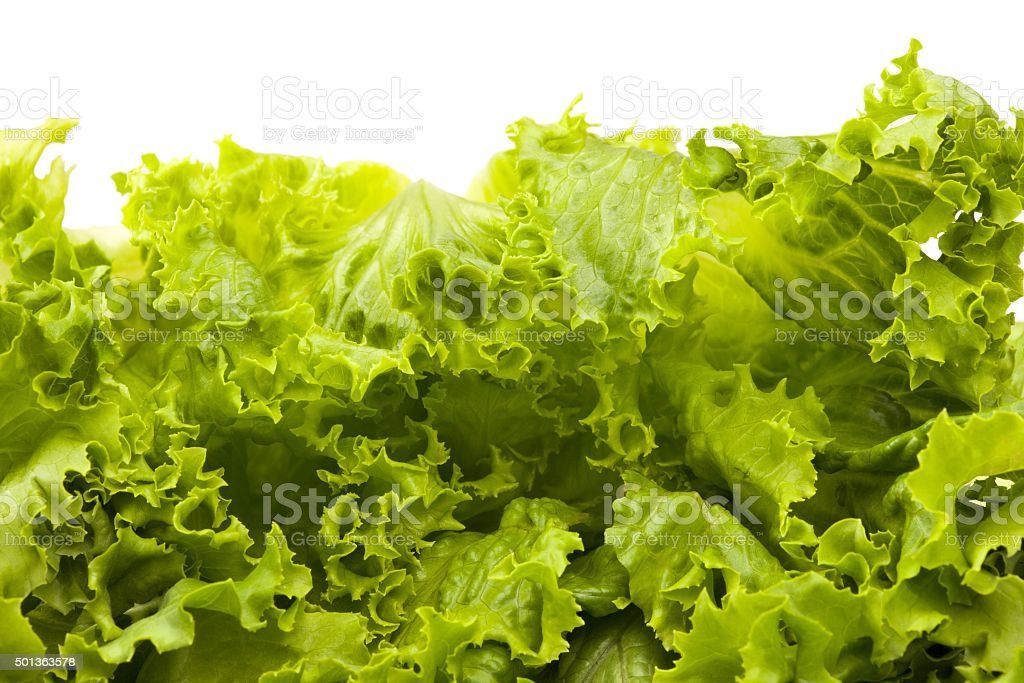 crisp and fresh lettuce leaves stock photo