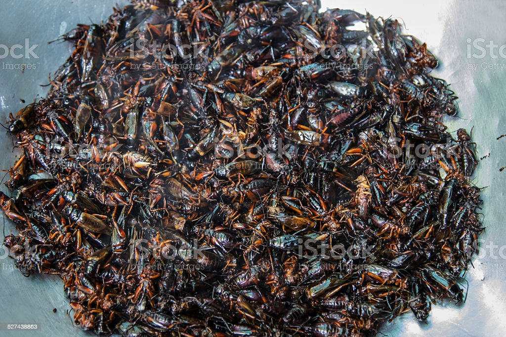 Crispy fried insects stock photo
