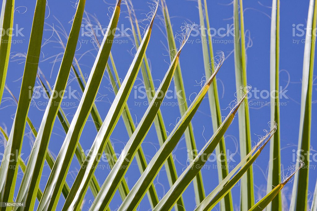 Criss Cross Palm Fronds royalty-free stock photo