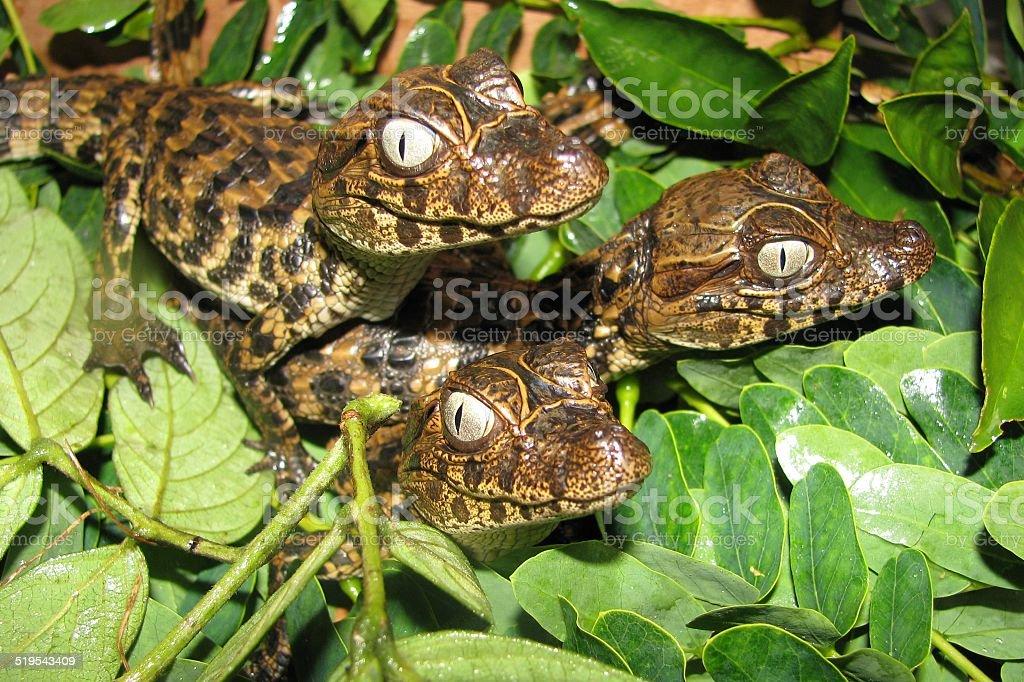 Croc baby stock photo