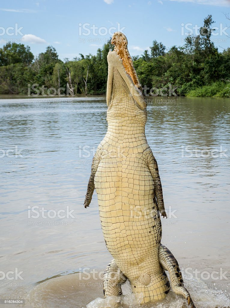 Crocodile at Kakadu stock photo
