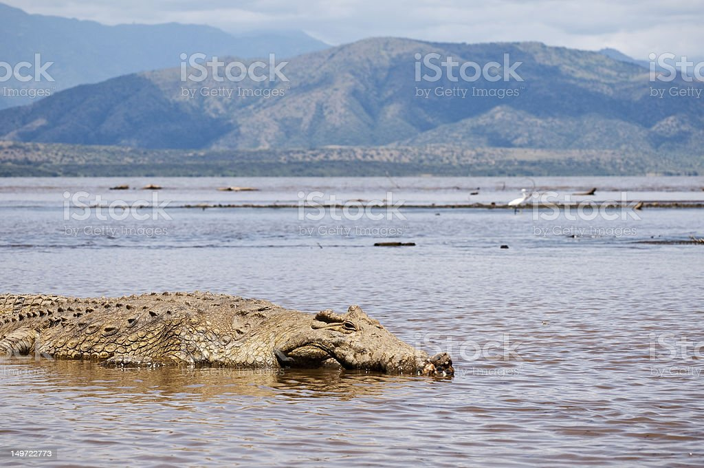 Crocodile basking in sun on Lake Chamo, Ethiopia stock photo