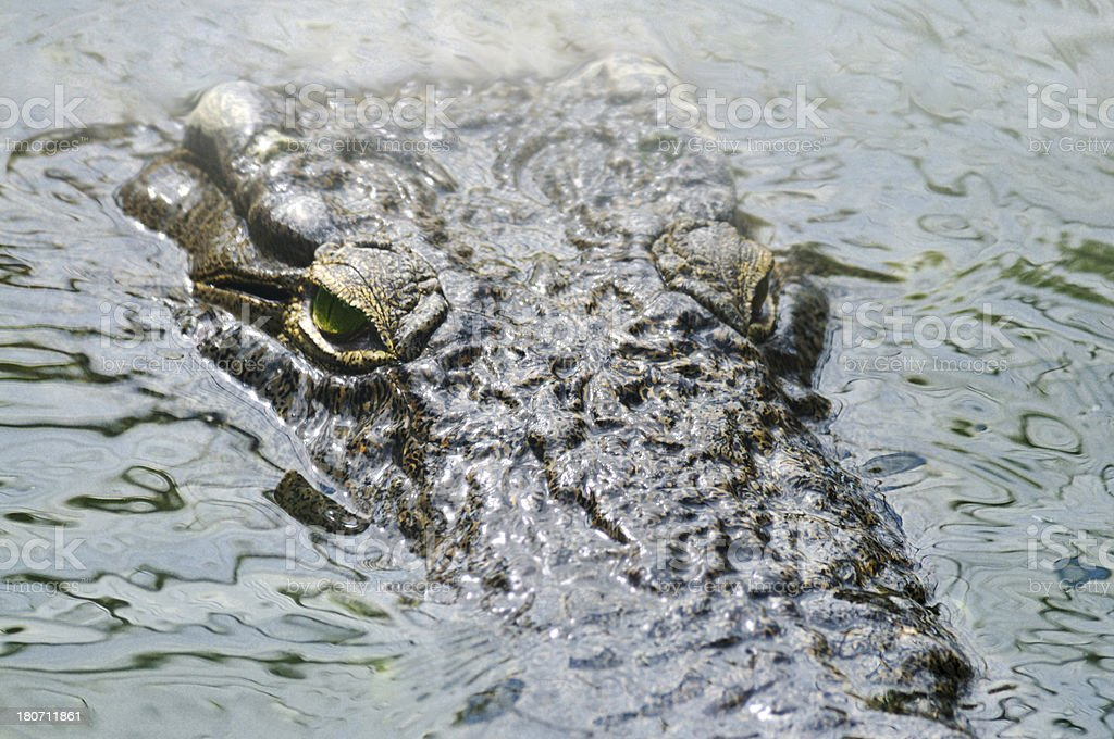 Crocodile camouflaged in water royalty-free stock photo