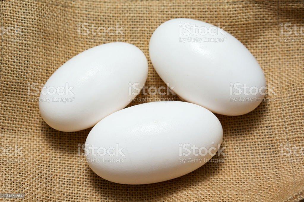 Crocodile eggs on burlap stock photo