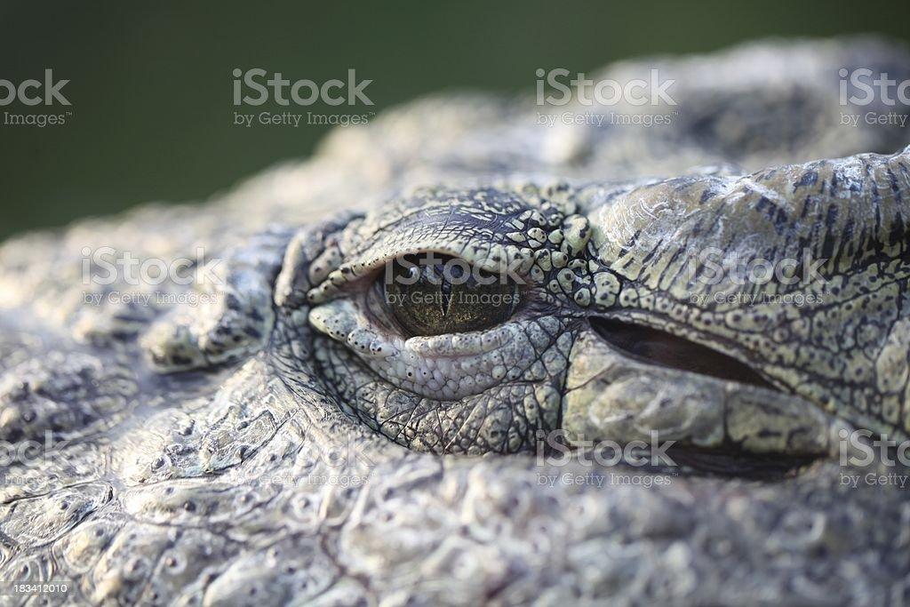 Crocodile eye royalty-free stock photo