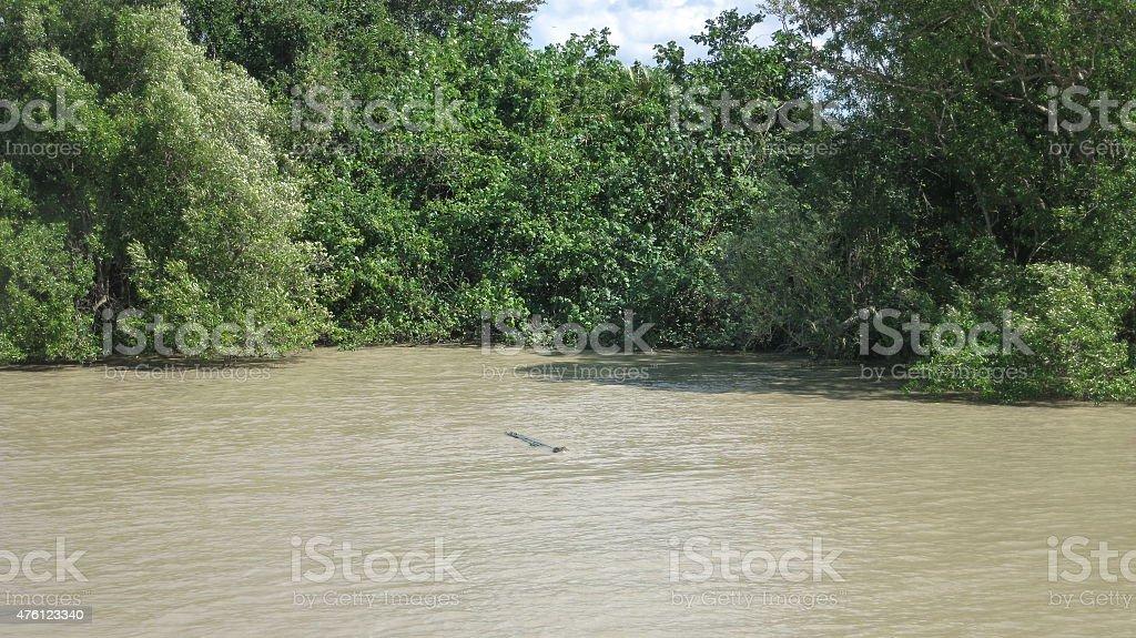 Crocodile in Adelaide River stock photo