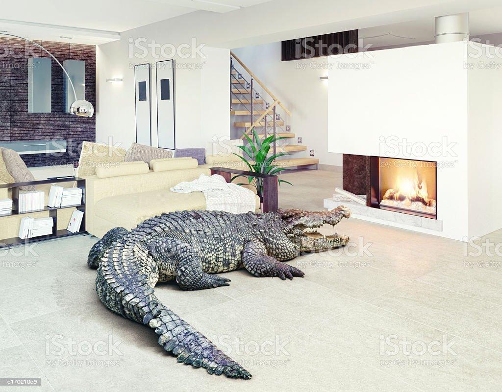 Крокодил в домашних условиях фото