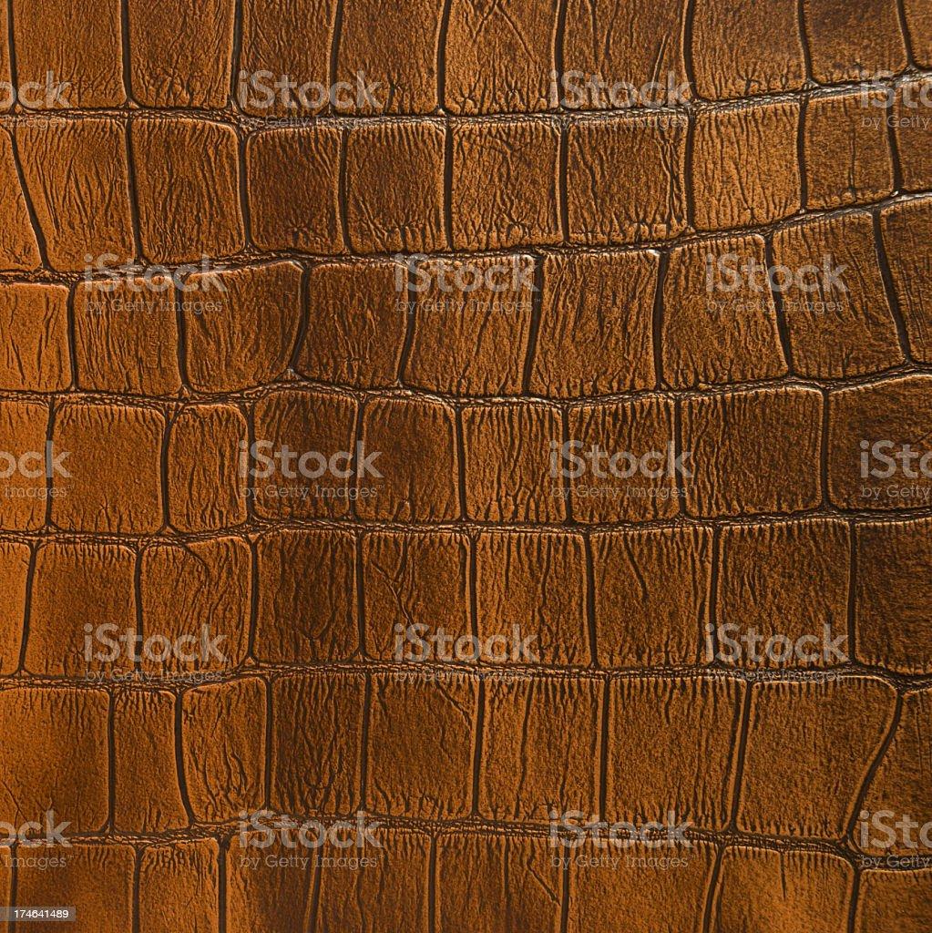Crocodile skin royalty-free stock photo