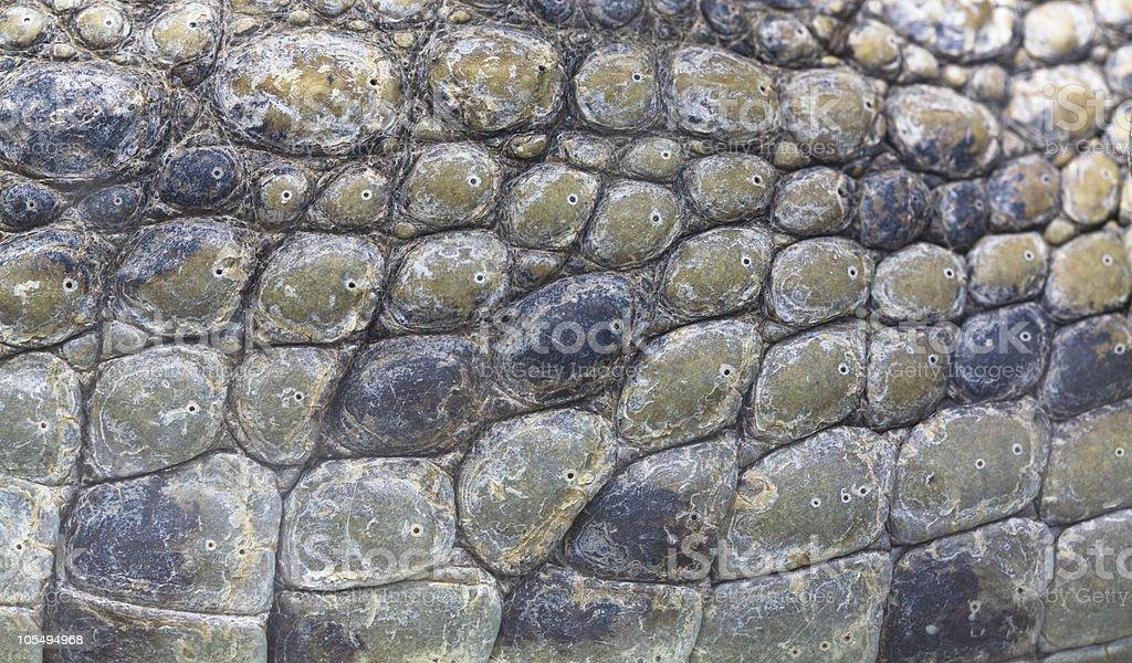 crocodile skin texture stock photo