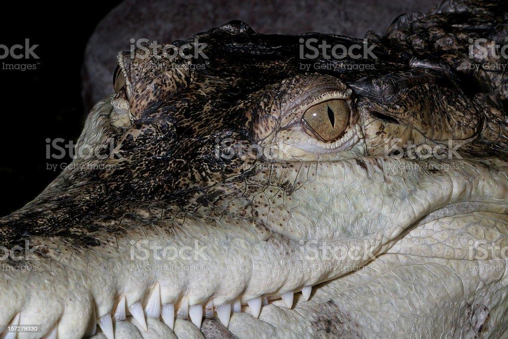 Crocodile Smile stock photo