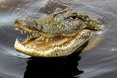 Crocodile Smile
