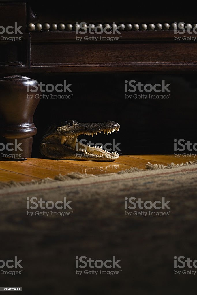 Crocodile under a chair royalty-free stock photo