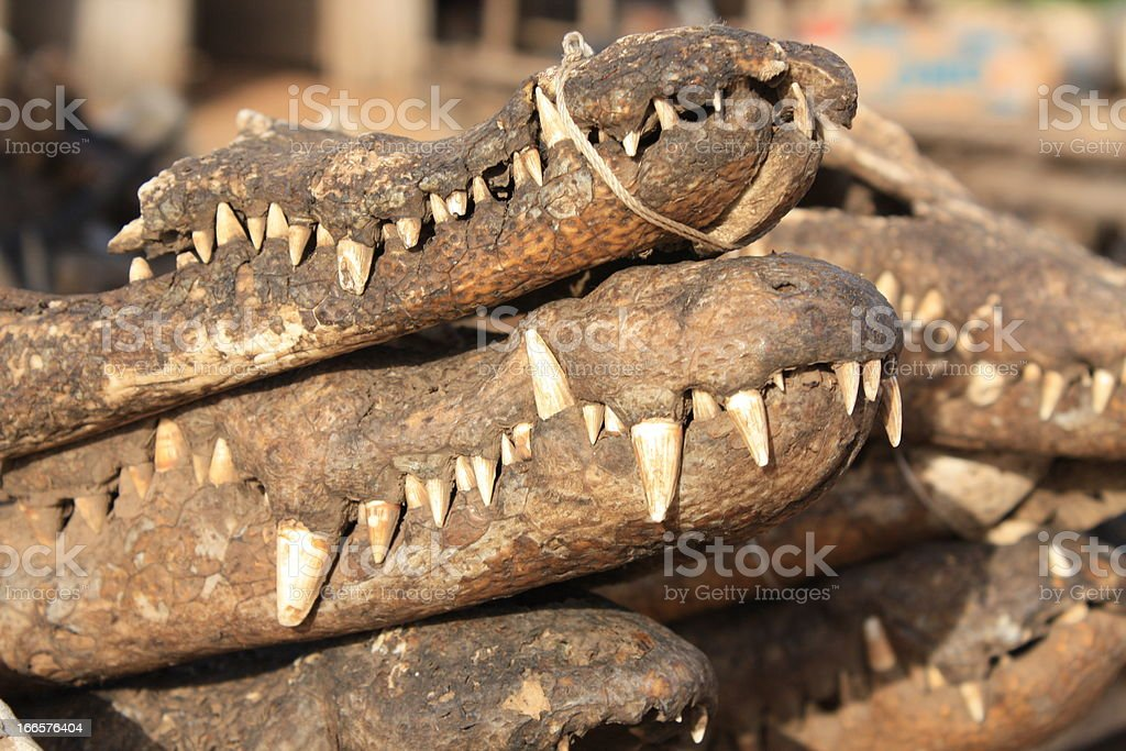 Crocodiles as Voodoo Supplies at Akodessewa Fetish Market, West Africa stock photo