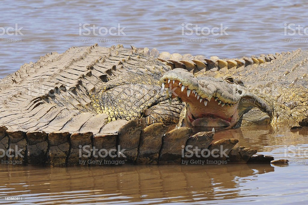 Crocodiles in Nechisar National Park near Arba Minch, Ethiopia stock photo