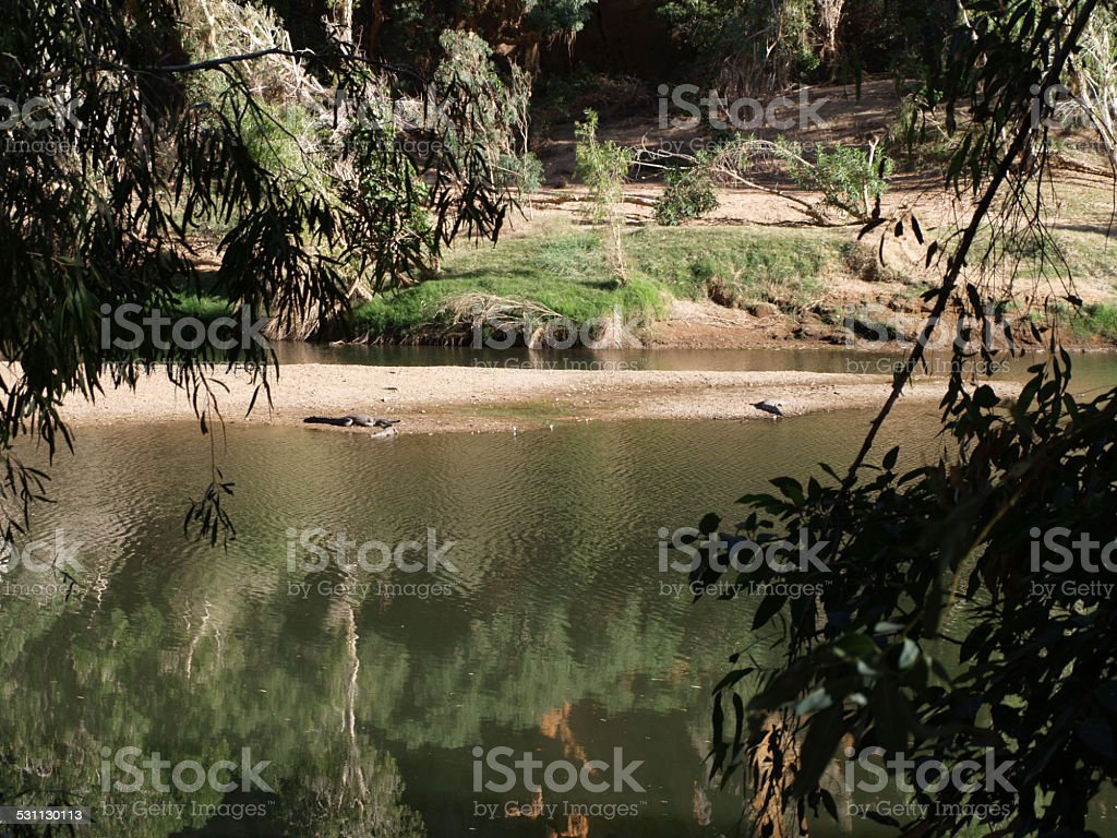 Crocodiles in the Windjana Gorge in Western Australia stock photo