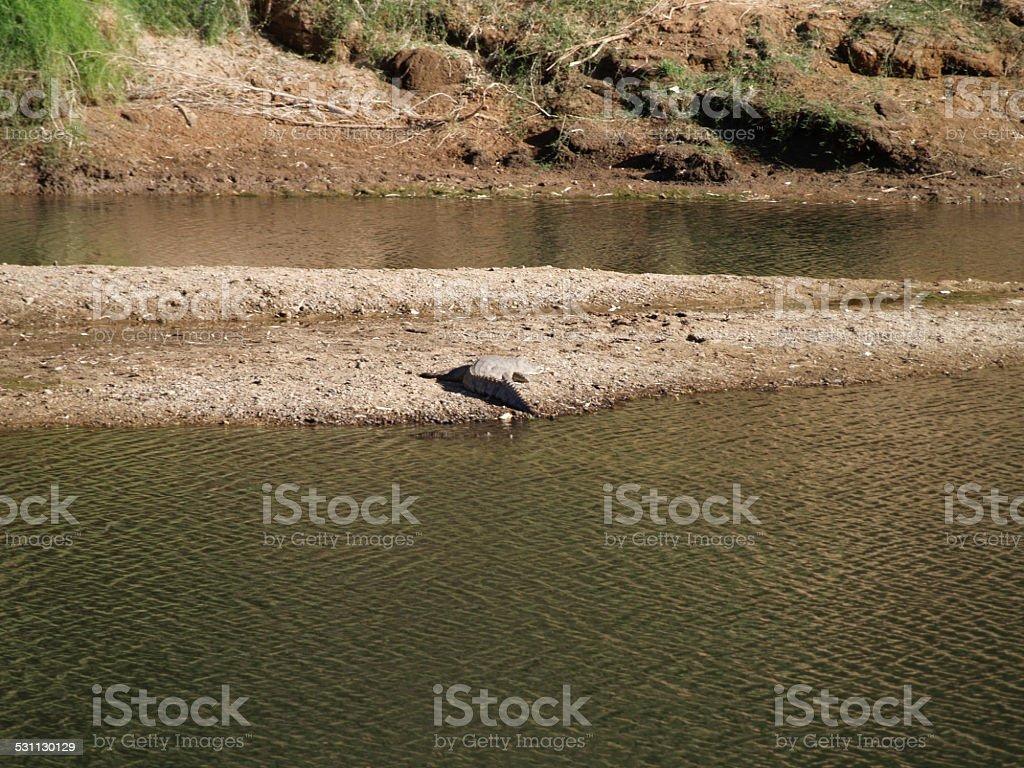 Crocodiles in the Windjana Gorge in Western Australia stock photo