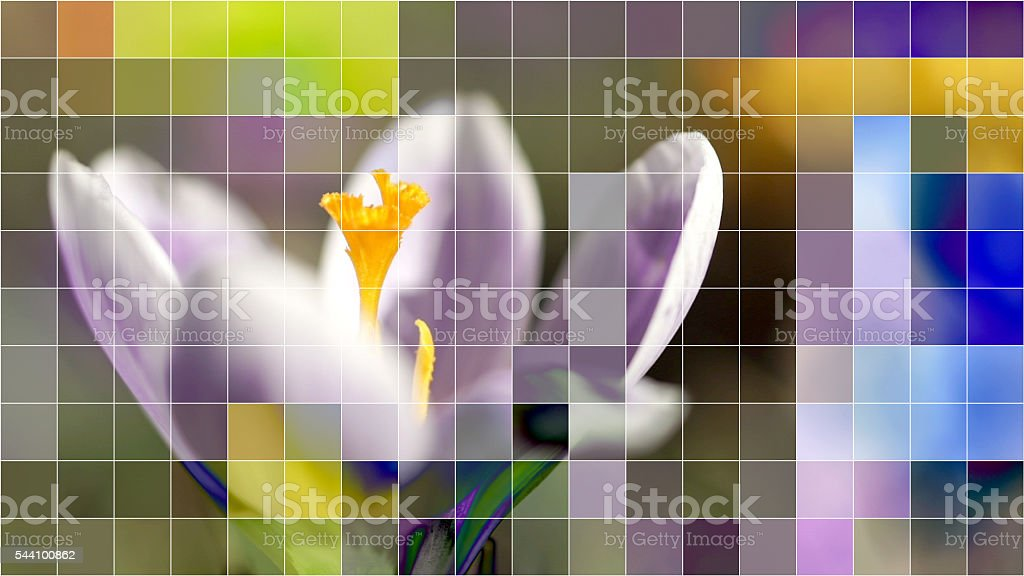 Crocus flower with mosaic effect. stock photo