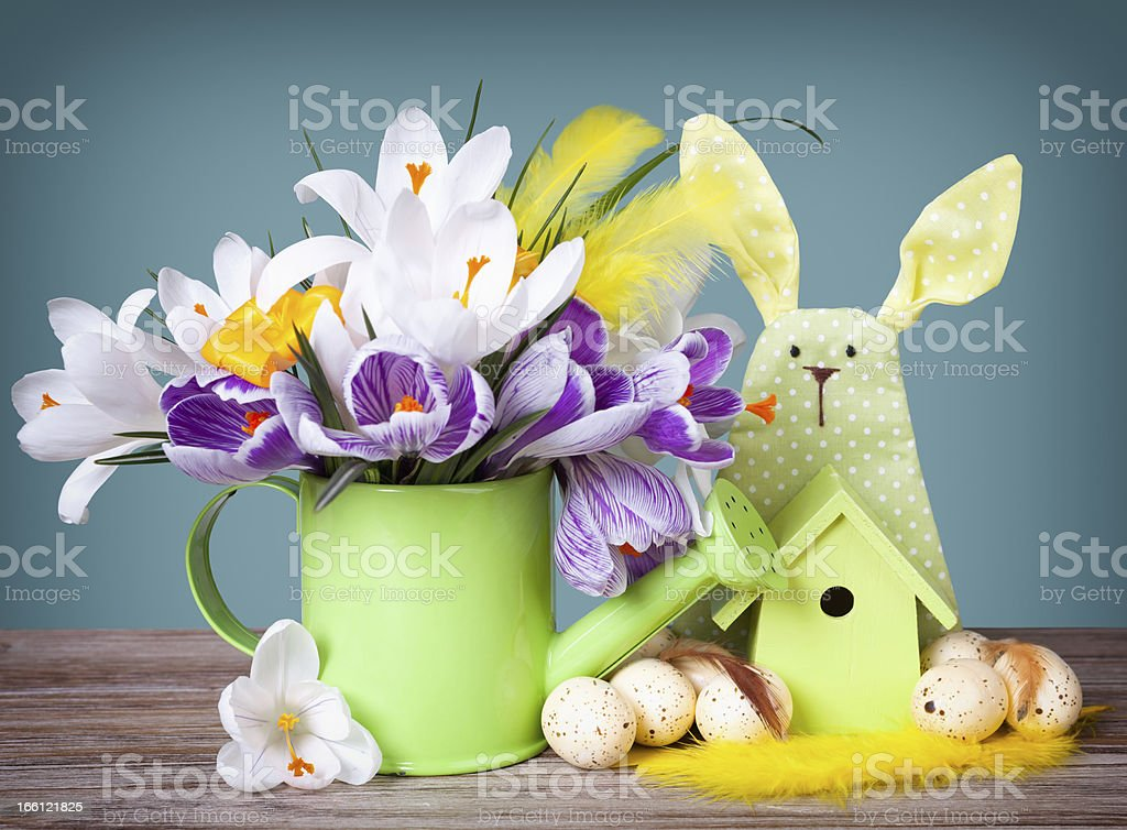 Crocus in  green watering can with easter eggs and decoration royalty-free stock photo