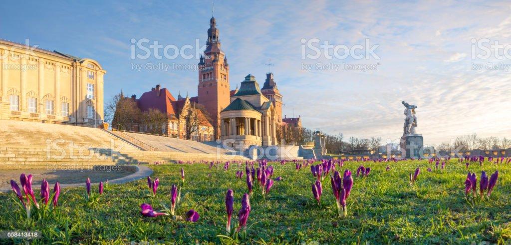 Crocuses blooming on Haken Terrace in Szczecin, Poland stock photo