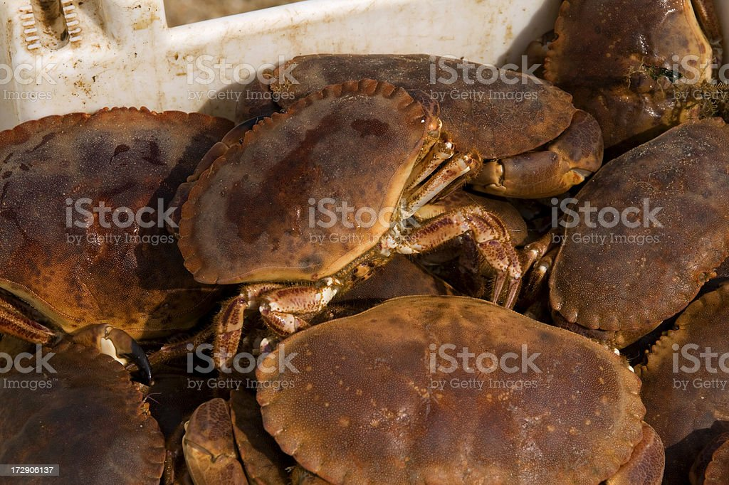 Cromer crabs royalty-free stock photo