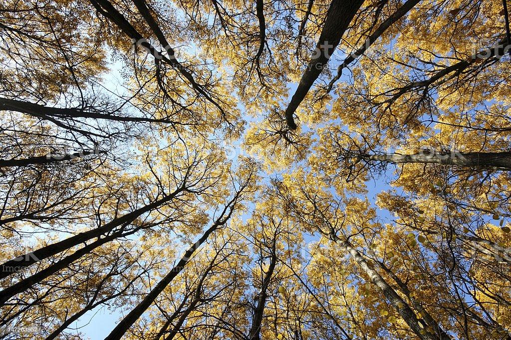 Crones of trees stock photo