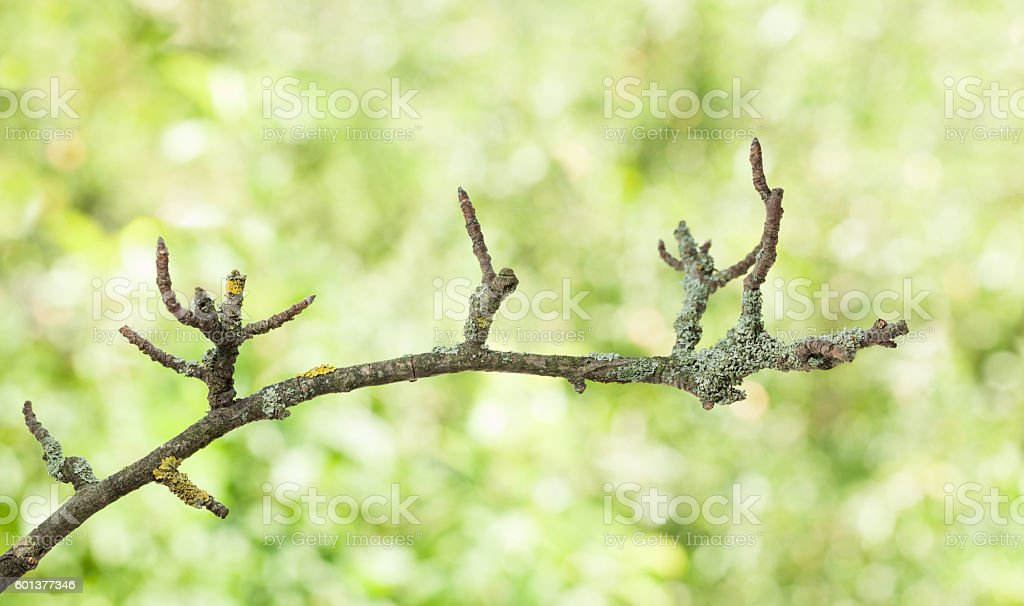 Crooked branch stock photo