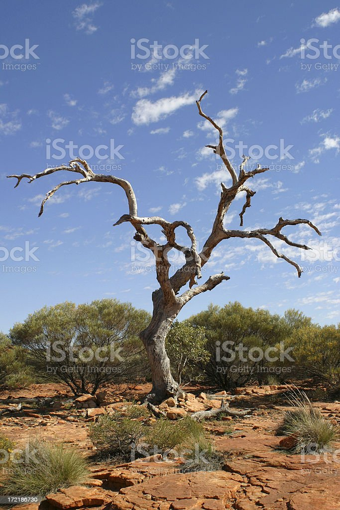 Crooked Old Tree royalty-free stock photo