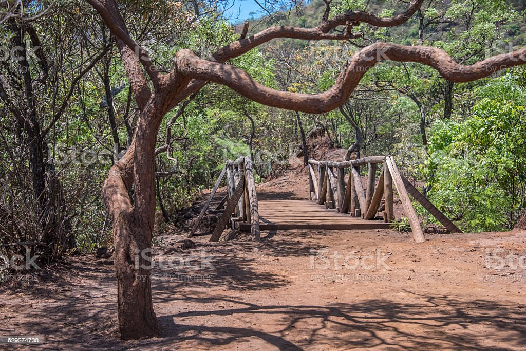 Crooked tree, wooden bridge and red earth in Mangabeiras Park stock photo