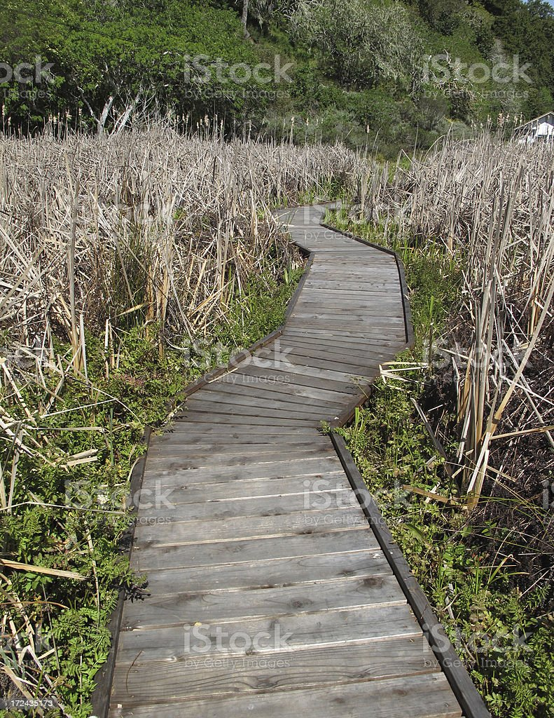 Crooked Wooden Path royalty-free stock photo