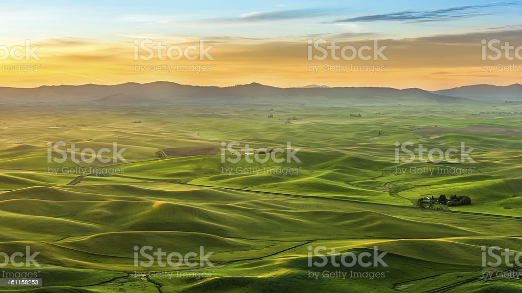 Crop field in the morning, Palouse hill stock photo