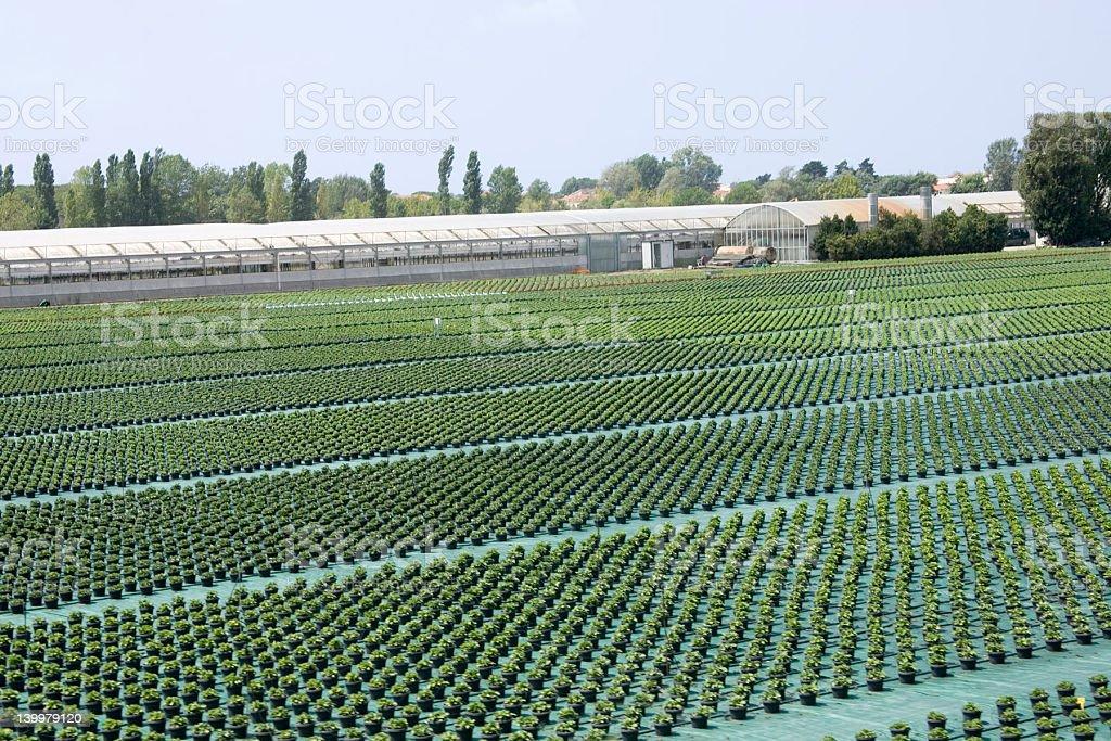 Crop field stock photo