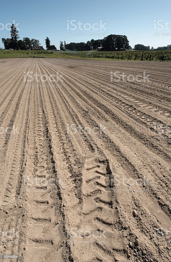 crop field with tracks stock photo