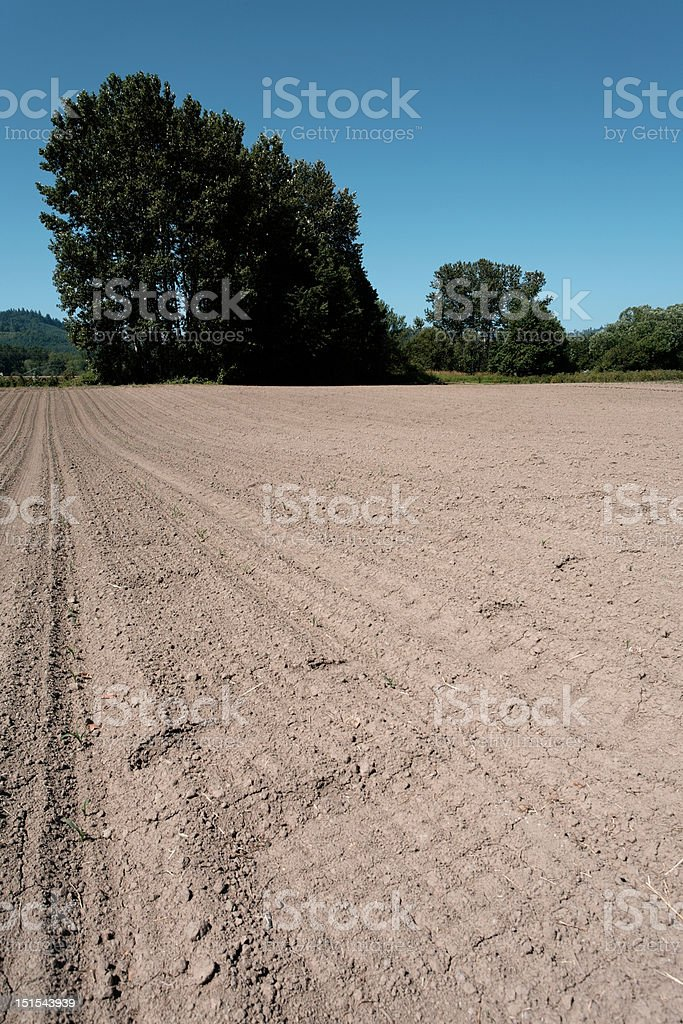 crop field with trees in distance stock photo