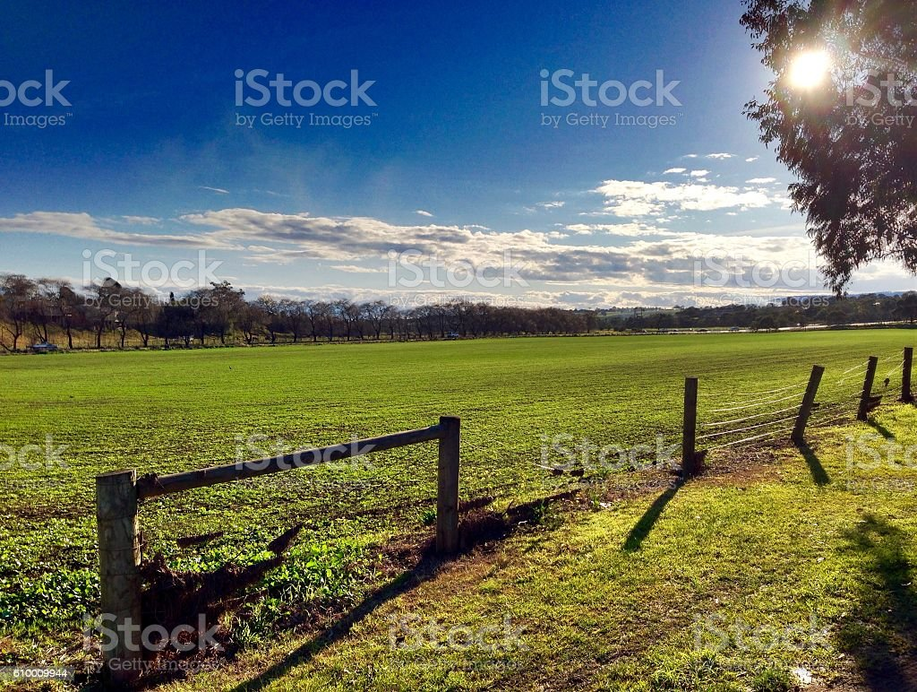 Crop growing in a field stock photo